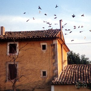 Birds startle from a southern french countryside house's roof.