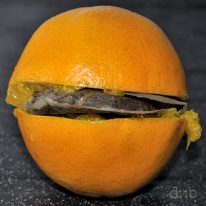 Remainders of an orange, filled with a Senseo-style ground coffee pad
