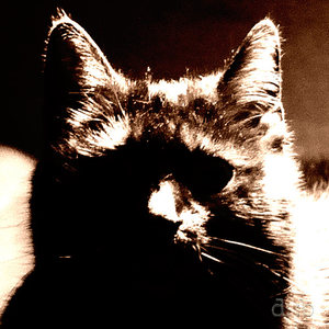 Black cat shilouette