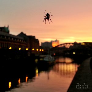 A spider in its web at Hamburg's port city