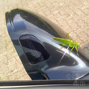 A grasshopper is sitting on a limousine's sideview mirror