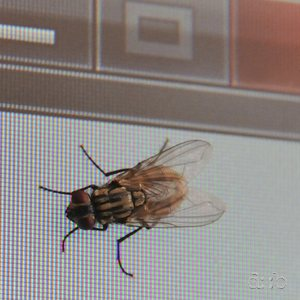 "A fly sitting close to an LC display with an MS Windows ""close"" button on it"