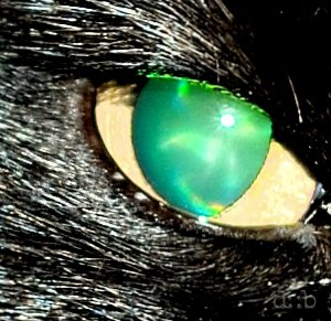 Green eyes on a black cat.
