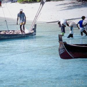 Workers on the beach are loading a boat with coconuts.